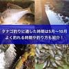 タナゴ釣りに適した時期は5月~10月!よく釣れる季節や釣り方も紹介