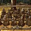赤山禅院の十六羅漢と三十三観音。