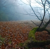 濃霧の森の住人たち