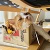 愛猫のカメラ写りへの強いこだわりを感じます。