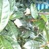 茶の花や商い薄き野菜棚