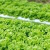 【気になるテクノロジー】 ぐるぐる回転する家庭菜園