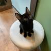 新しい保護猫のご紹介とお知らせ
