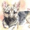 彼女へのプレゼント!愛犬の水彩イラストを描かせて頂きました!