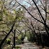 心地よい 春の陽気に 癒されて・・・