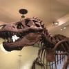 #16 ニューヨーク自然史博物館でギフトパトロール