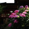 あじさい咲く北小金の本土寺へ