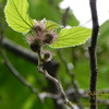 森の匂い 木の花 カジノキなど 新宿御苑