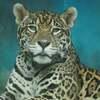 天王寺動物園のジャガーのルース(^^♪
