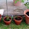 植えた草木レビュー1