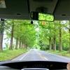 夏!深緑のメタセコイア並木とマキノピックランドでブルーベリー狩り