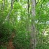 新緑の林の中を歩く