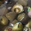 ニナ貝の佃煮🤗