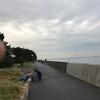 福浦岸壁 釣果