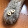 ネコの爪 vs ニンゲンの爪
