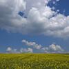 雲はなぜ浮いているのか?夏休みの自由研究編
