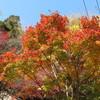 箕面の紅葉を見に行く(大阪)…過去20161126