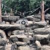 猿の餌やり見物 智光山動物園