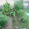 庭が崩壊しました。