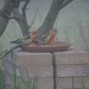 猛暑の中の野鳥(リフォーム4)