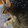 人生は、何があるか分からない!何故か猫を飼うことになりました。