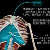 """【ベンチプレス】""""肩の負担を減らす""""重要な「胸郭・横隔膜」の動きとは?"""