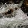 桐生川の流れの中へグンタ沐浴する!