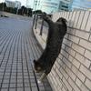 12月前半の #ねこ #cat #猫 その3