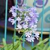 爽やかな愛の花