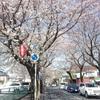 千葉県松戸市のさくら通り20180325