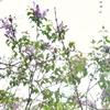 【昭和の日】生まれて最初の記憶は? 裏庭の花に新事実!