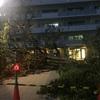 台風で倒れた大きな木