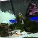 海水魚日記 磯で採取した仲間たち