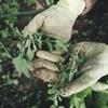 雑草を抜いた後の処理方法や捨て方は?肥料にもなる?