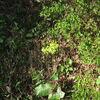 石蕗の花。豊前福光派古術 07・11・1