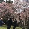春の訪れ...?