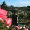 秋バラを見に「京成バラ園」に行ってきたよ