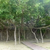 巨樹に覆われた廃墟、そして「からすみ」 ~安平~
