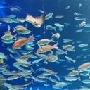 初めて陸に上がった魚の見た空は…?