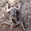 【海外】ミイラ化した動物園 ― 人間だけではない、紛争地区の悲しい光景=ガザ地区(画像あり)