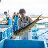 2018年9月10日 小浜漁港 お魚情報