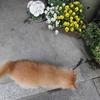 黒櫛 その後の桜 猫