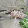 自宅のバベの木を切っちゃったって件。