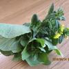 春の収穫・・菜の花 と 家の片付けの話