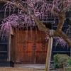 高知城の梅 2021.2.21