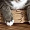 猫の手フェチ