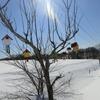 北海道 美瑛町 散策202003 / 市街地とケンとメリーの木付近