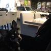 犬同伴OKの カフェ ガレージ 夜に行ってみた