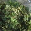 木の芽田楽