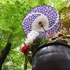 🌸上野東照宮 春のぼたん苑に行ってきました🌸